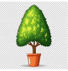 Green tree in pot on transparent background vector
