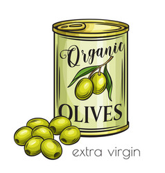 canned olives in tin can vector image