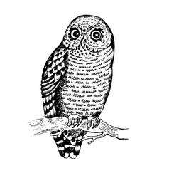owl bird engraving vector image vector image