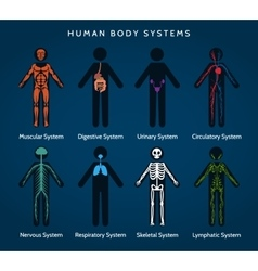 Human body systems anatomy vector