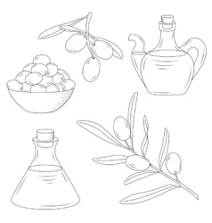 Bottle of oil and the branch of the olive tree vector image
