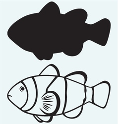 Tropical reef fish vector image