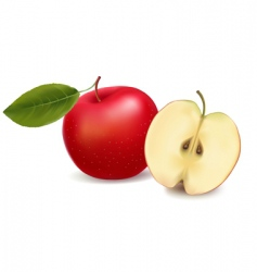 apple red with leaf vector image vector image