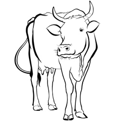 Cow animal vector