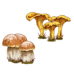 Mushrooms orange cap boletus and chanterelles vector