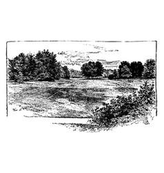 The meadow vintage vector