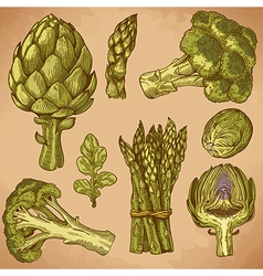 engraving green vegetables retro vector image