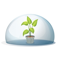 A plant in a pot inside a transparent dome vector
