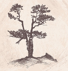 Hand drawing larch tree vector