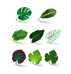 Leaves set eps 10 vector