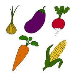 Ripe vegetables on a white background vector