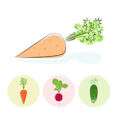 Icons carrot cucumber radish vector image