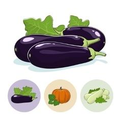 Icons eggplant pumpkin zucchini vector