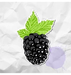 Ripe blackberry vector