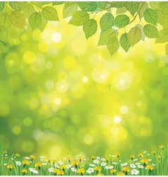 leaves flowers background vector image