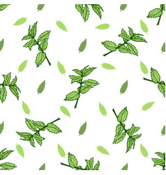 Sketch herbal mint tea hand drawn seamless pattern vector