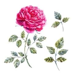 Watercolor hand drawn rose vector image
