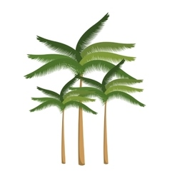 Palm tree beach design isolated vector