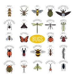 Insects icon flat style 24 pieces in set colour vector