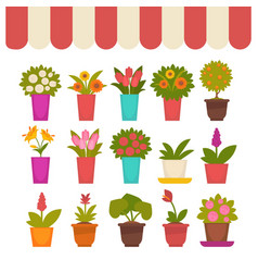 flowers in pots set under clothing cover vector image vector image