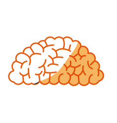 Brain human organ memory mind vector