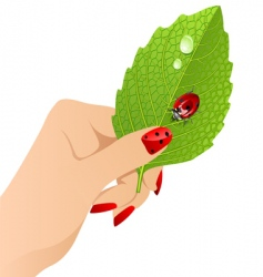 female's hand with leaf. vector