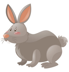 rabbit with gray fur vector image