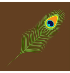 Peacock feather exotic tropical bird colorful tail vector