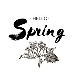 Phrase hello spring brush pen lettering isolated vector