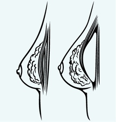 Plastic surgery vector image