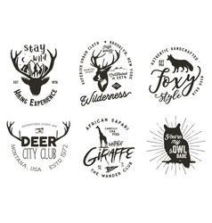 Wild animal badges set included giraffe owl fox vector