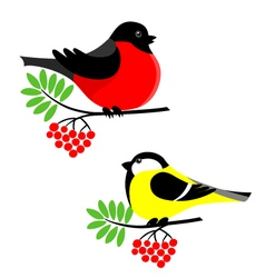 Bullfinch and tit vector