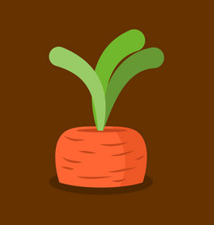 Carrots growing isolated fresh vegetables in vector