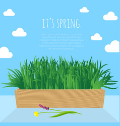 fresh green spring grass s in the pot vector image