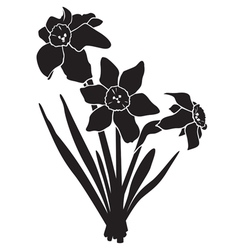 narcissus silhouette vector image