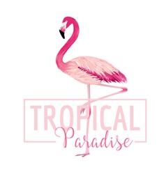 Tropical bird flamingo background summer design vector