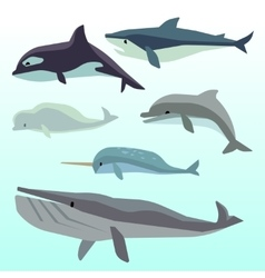 Whales and dolphins marine underwater mammal vector