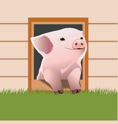Piglet come out from the pet door vector