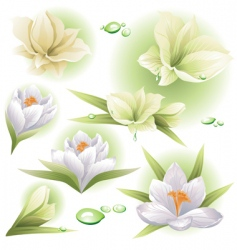 flowers collection vector image vector image