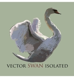 Swan isolated object Watercolor vector image vector image