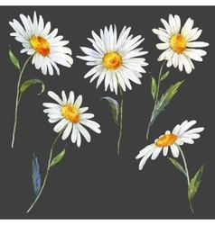 Watercolor daisy set vector