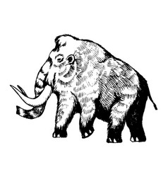 mammoth engraving vector image vector image