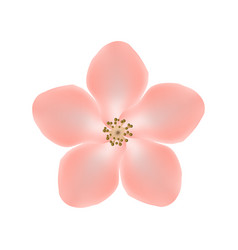 sakura flower isolated on white background eps10 vector image