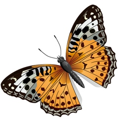Some orange butterfly vector