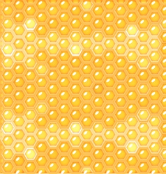 Fluid honey in honeycomb vector