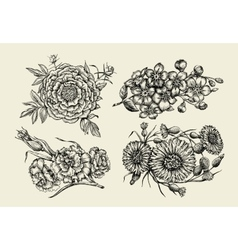 Flowers hand drawn sketch flower peony vector