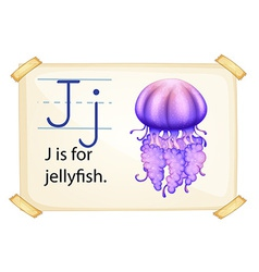 A letter J for jellyfish vector image vector image