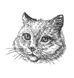 hand-drawn portrait of cat sketch vector image