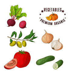 Hand drawn vegetarian isotaled vector