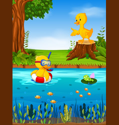 two duck and frog in the river vector image vector image